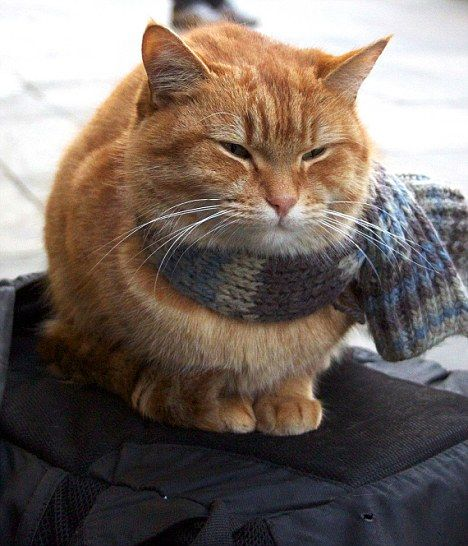 Bob the cat. Former stray who now goes busking with his master in Covent Garden. Looking peaceful and content, and always sporting stylish scarves, he sits all still watching the crowd hurry past.