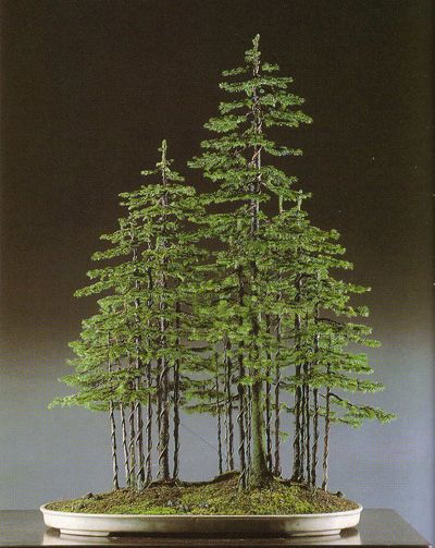 #Bonsai #forest #bonsaiforest formalforest2.jpg (400×503).I love bonsai trees.Please check out my website thanks. www.photopix.co.nz