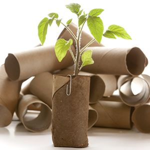 10 *Brilliant* Frugal Gardening Tricks! I've used the tp roll trick for a few years now. When I plant the roll I leave a bit of it exposed. It not only helps to guide the plant upright but more importantly keeps the bugs away. And I label each roll w the variety of seed so when I finally get around to marking the plants I have a quick reminder of what's what!