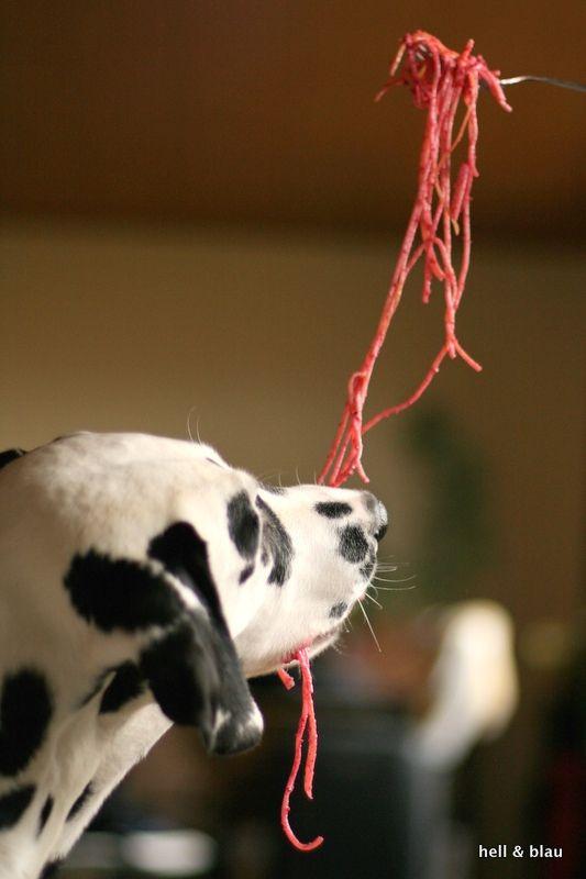 Rote Bete Pesto für den Hund. Das Rezept dazu gibts hier: http://hellundblau.blogspot.de/2015/02/ValentinspestofuerdieMaennerdesHauses.html#more