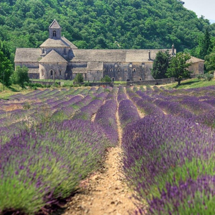 Provence field