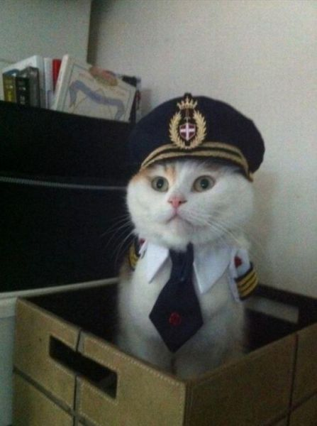 @Tracy Ann MooreKitty Cat,  Dust Jackets, Pilots, Funny Stuff,  Dust Covers, Book Jackets, Captain, Animal,  Dust Wrappers