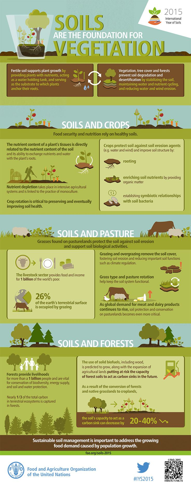 Soils and vegetation have a reciprocal relationship. Fertile soil encourages plant growth by providing plants with nutrients, acting as a water holding tank, and serving as the substrate to which plants anchor their roots. In return, vegetation, tree cover and forests prevent soil degradation and desertification by stabilizing the soil, maintaining water and nutrient cycling, and reducing water and wind erosion.