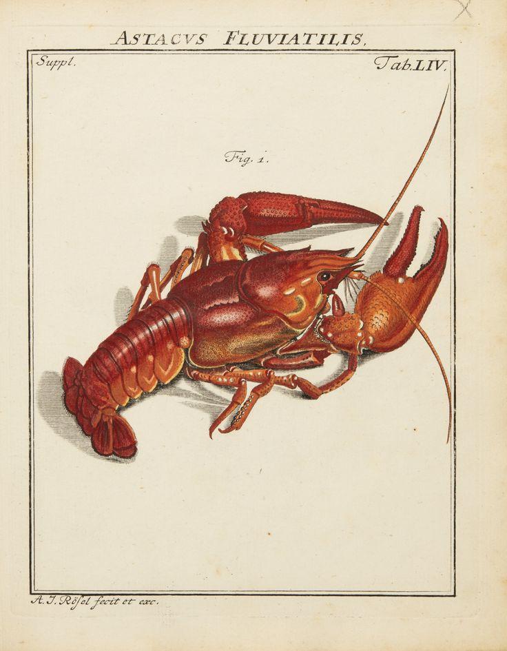 606 besten Sea creatures Bilder auf Pinterest