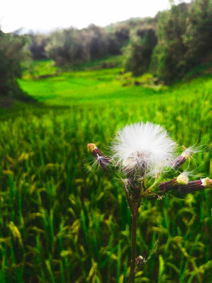 growth, nature, beauty in nature, flower, focus on foreground, plant, fragility, tranquility, field, green color, grass, close-up, no people, outdoors, day, freshness, flower head