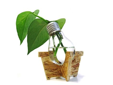 Ingredientes:    - Un foco quemado    - Una base de maceta potus    - Una pizca de  potus         Estrategia de ecodiseño:    - Las piezas se vinculan entre sí a través de un encastre, sin necesidad de aglutinantes o elementos externos.    - El encastre facilita el desarme del producto para su posterior reciclado. El OSB de la base puede ser incinerado sin emitir gases nocivos y el vidrio es reciclable.         $60,oo.-         KUKU©