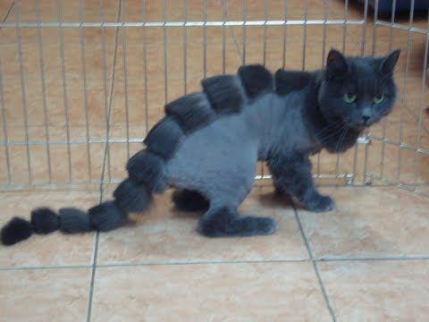 Видео приколы смешное видео с котами и кошками 2017 #2 (ТОП приколы 2017... #смешныекошки #кошки #коты #котята #котенки #приколыскотами #смешныекоты #котприкол