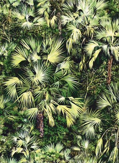 Regenwald Tapete Vue d'en Haute von Pierre Frey - Vert