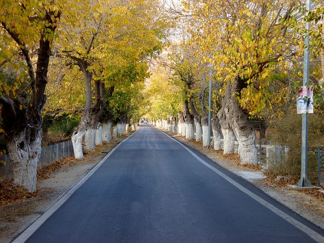 Road to Eressos   Flickr - Photo Sharing!