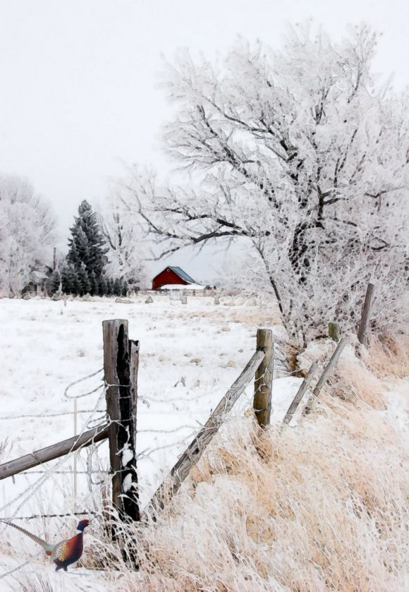 .winter in the country