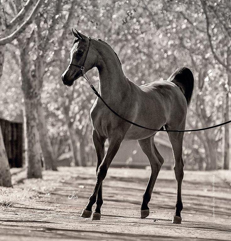 Such a dainty pretty horse. Precious. Ghazwan Aljassimya