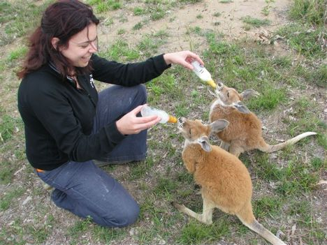 Volunteer abroad (animal conservation)