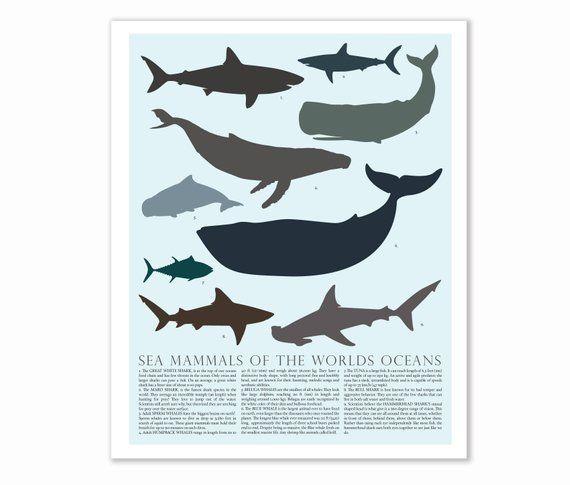 Sea animal print, Beach wall decor Ocean print, Whale print Shark decor Nursery …