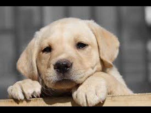 Dog Training - Dog Training Online