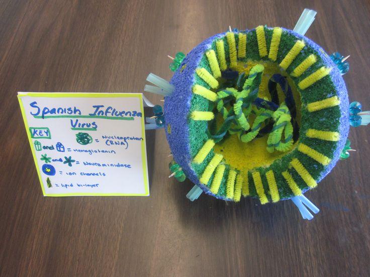 Influenza Virus Model High School Biology Pinterest