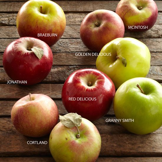 Find out the difference between apple types. We also tell you the best way to peel and core an apple, select apples, and store apples.