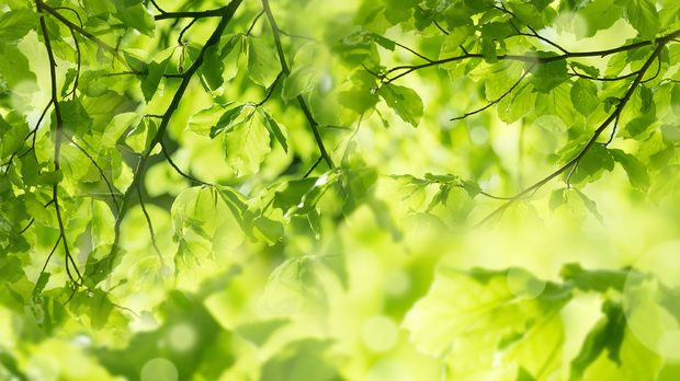 Fresh Leaves and Sun Rays