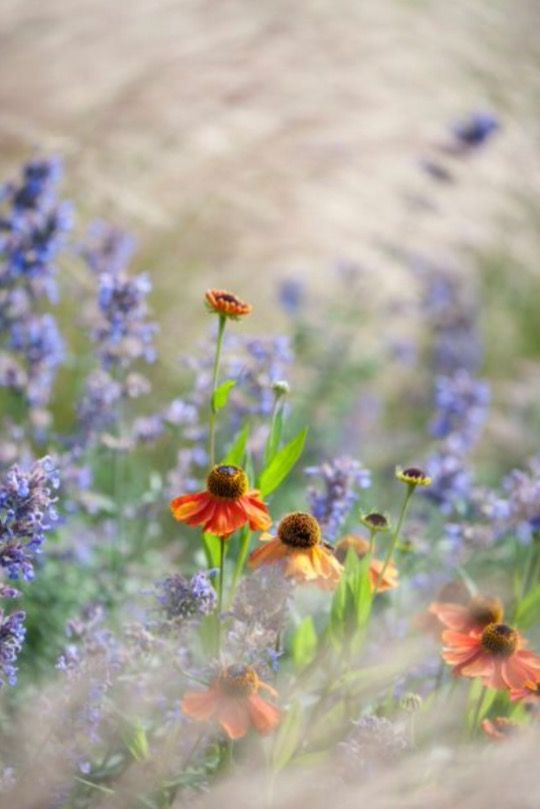 """These flowers and grasses are from our feature """"Tales of Grass"""""""
