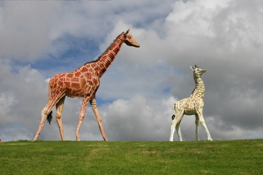 Jeff Thomson 'Giraffes' (2007)
