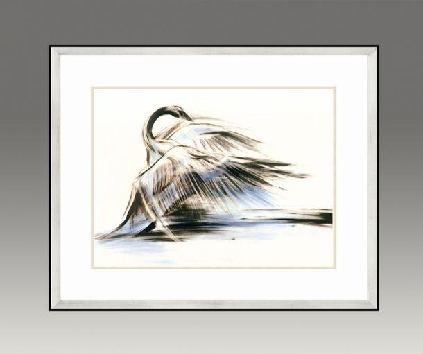 Swan. Water Series