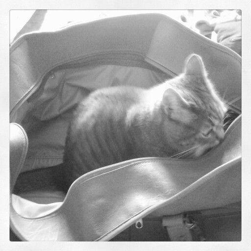 Gatti in partenza... :-)