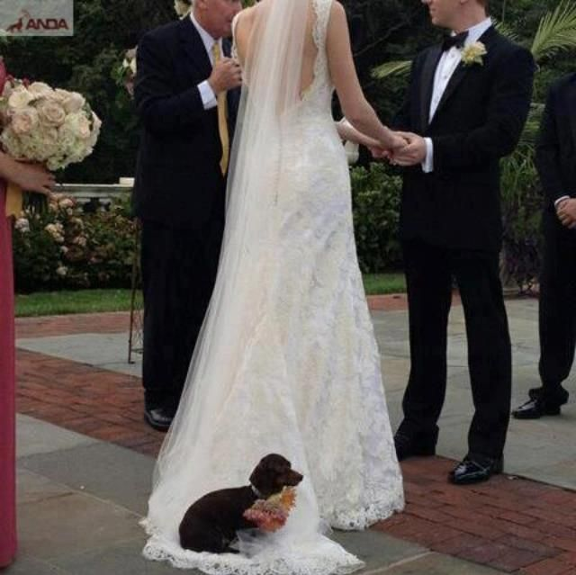 Funny Wedding Gowns: 15 Best Images About Wedding Bloopers On Pinterest