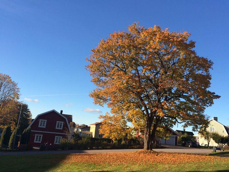 Fall trees are SO beautiful!