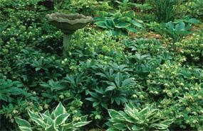 Shade Perennial Combinations!  Best Flowers for Shade Gardens | Shade Flowers & Foliage | Bloom IQ: Flowers Gardens, Gardens Ideas, Gardens Bloomiq Com, Shades Flowers, Gardens Group, Gardens Gardens, Gardens Shad, Combinations Ideas, Gardens Growing