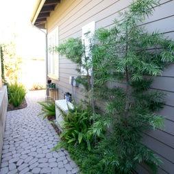 Side garden & paving