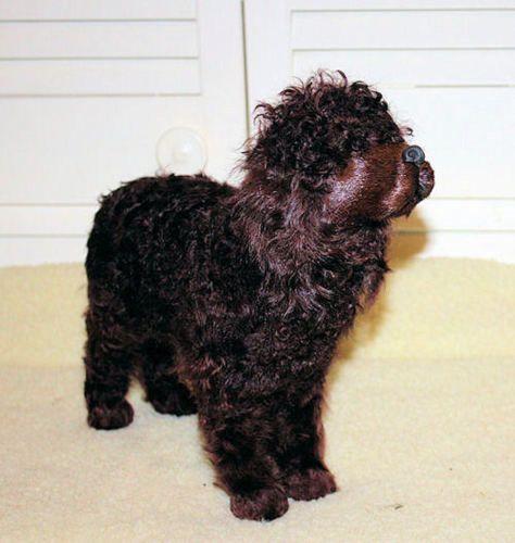 Irish-Water-Spaniel-Goat-Hair-Collectible-AKC-Model-Photo-Prop-Replica-Dog