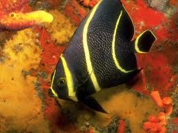 pesci tropicali - Cerca con Google