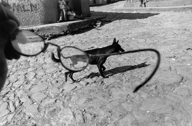 """Larry Towell, EL SALVADOR. Perquin, Morazan, 1991. A dog is seen through the photographer's eyeglasses. Perquin was one of the two """"guerilla capitals"""" during the war."""