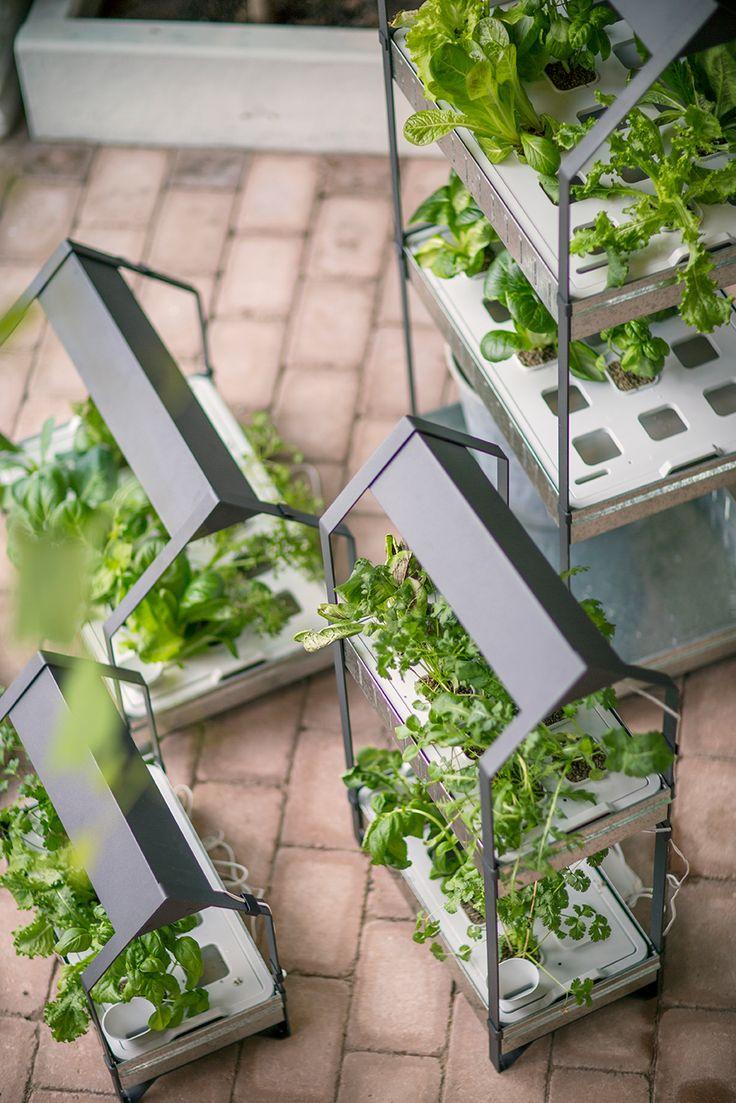 И имай търпение, защото в зависимост от растението, израстването му може да отнеме до 7 седмици. http://www.ikea.bg/indoor-gardening/growing-cultivators/growing-kits/60741/87411/