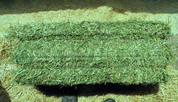 Global Alfalfa Hay Market 2017 - ACX Global, Anderson Hay, Bailey Farms, Aldahra Fagavi, Grupo Oses - https://techannouncer.com/global-alfalfa-hay-market-2017-acx-global-anderson-hay-bailey-farms-aldahra-fagavi-grupo-oses/