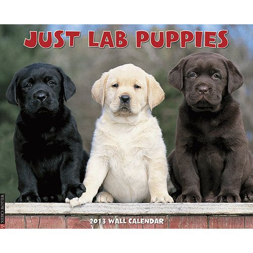 Just Lab Puppies Wall Calendar: All the charms, cuddliness and innocence of Labrador Retriever puppies are perfectly captured in these twelve adorable photographs.  http://www.calendars.com/Labrador-Retrievers/Just-Lab-Puppies-2013-Wall-Calendar/prod201300002932/?categoryId=cat10086=cat10086