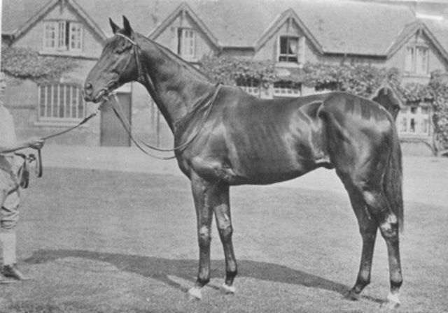 Tiberius(1931)(Colt)Foxlaw- Glenabatrick By Captain Cuttle. 4x5 To Bauy Ronald, 4(F)x4(F) To Cyllene, 4(C)x5(C) To Donovan. Won Newmarket St Leger(Eng), Ascot Gold Cuo(Eng), Goodwood Cup(Eng), 2nd Dewhurst S(Eng), Lingfield Derby Trial(Eng), St Leger S(Eng), 3rd Greenham S(Eng).