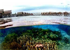 About and under water at Kapalai Island