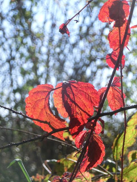 WWW Wiersze Wycieczki Wspomnienia: Słoneczna jesień