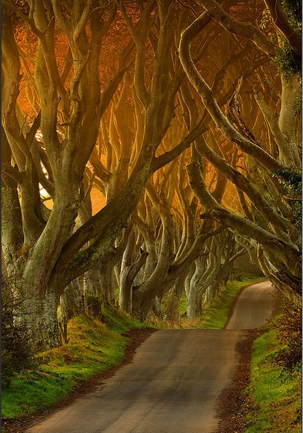Dark Hedges in Ballypatrick Forest, Northern Ireland | See More Pictures | #SeeMorePictures