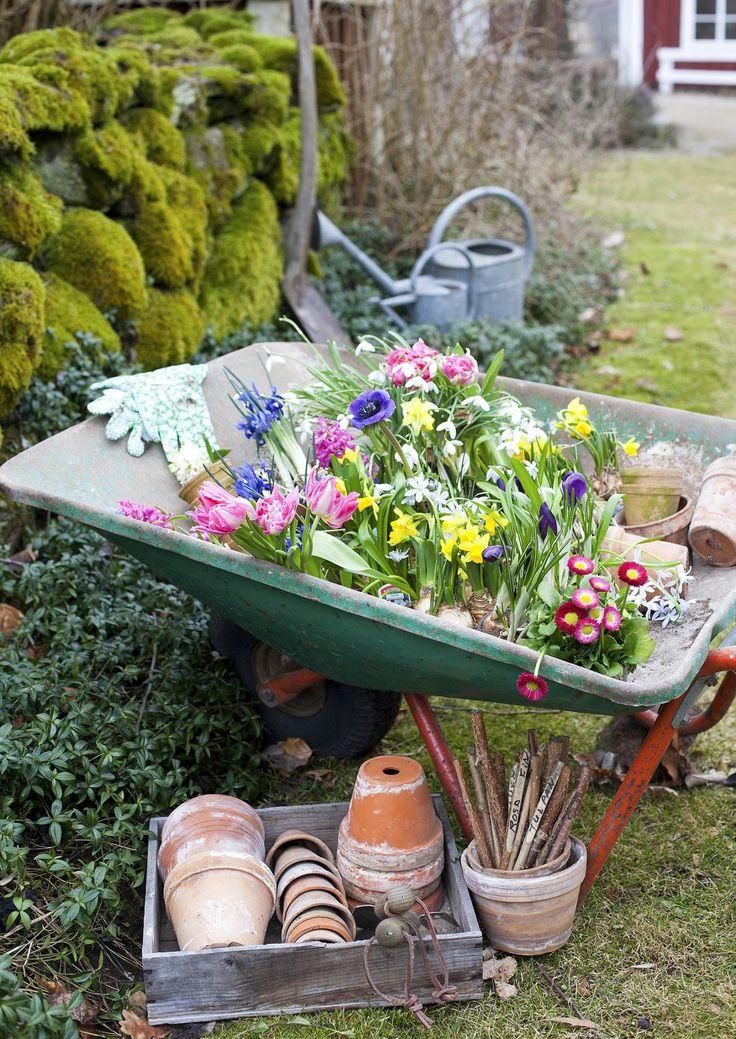 Narsissit, krookukset, esikot ja orvokit kestävät pientä pakkastakin. Lue Unelmien Talo&Kodin vinkit ja tee itse kauniita kukka-asetelmia ulos!