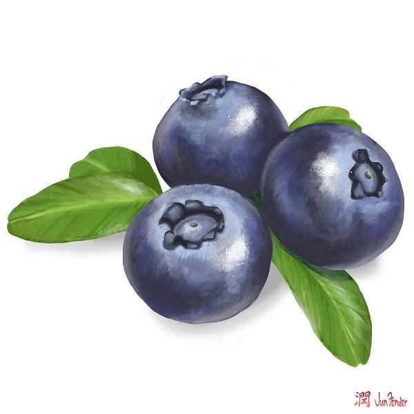 Digital painting of some blue berries, for a project Im working on. yes its a painting, digital, in photoshop.