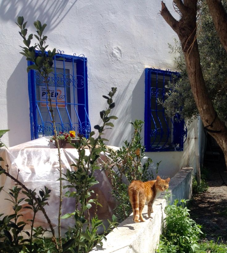 Ginger cat on a wall in Turgutreis