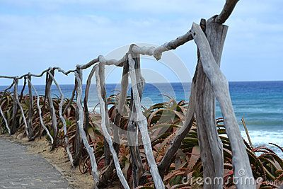 Wood Natural Sticks Fence With Cactus - (C) Celia Ascenso 2016