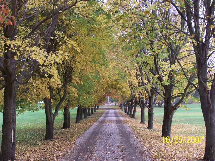 Long driveway lined with tress...perfection