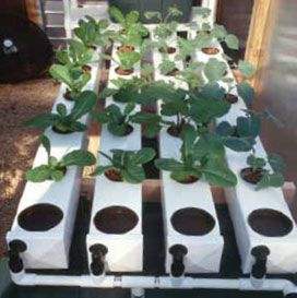 Shown here growing broccoli on the right and several varieties of leafy greens in the remaining three chambers. This system is extremely versatile and very popular with commercial growers looking to produce large harvests from small spaces both indoors and out.