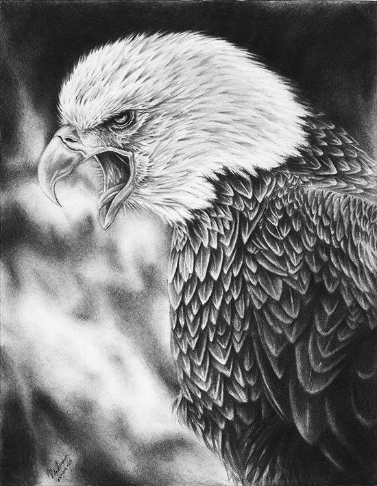 Pencil Art Gallery Eagles | Screaming Eagle Drawing by ErnestoVladimir