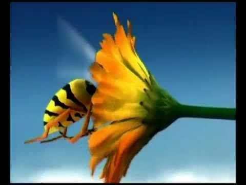 ▶ Minuscule - Top guèpe et Fourmis - Un monde Minuscule. - YouTube