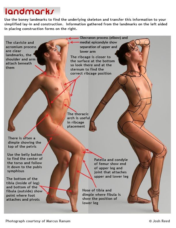 107 best Anatomy - Body images on Pinterest   Drawing reference ...