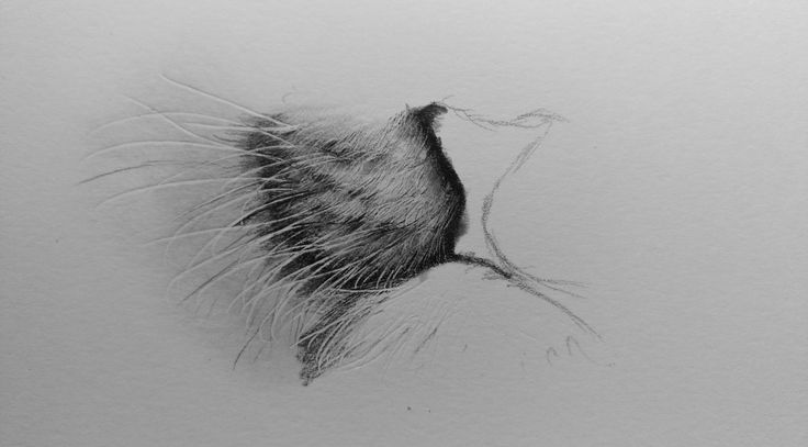 Tips and Techniques for Pencil Drawing