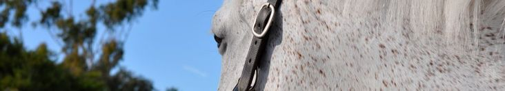 Pro Equine Grooms - Groom After Your Horse Exercises!